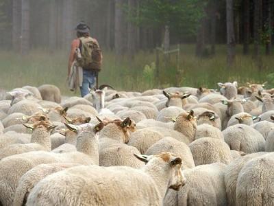 Herder op de heide tijdens Inspiratiedag Groene Uitvaart